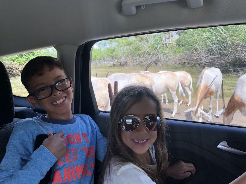 lion_country_safari